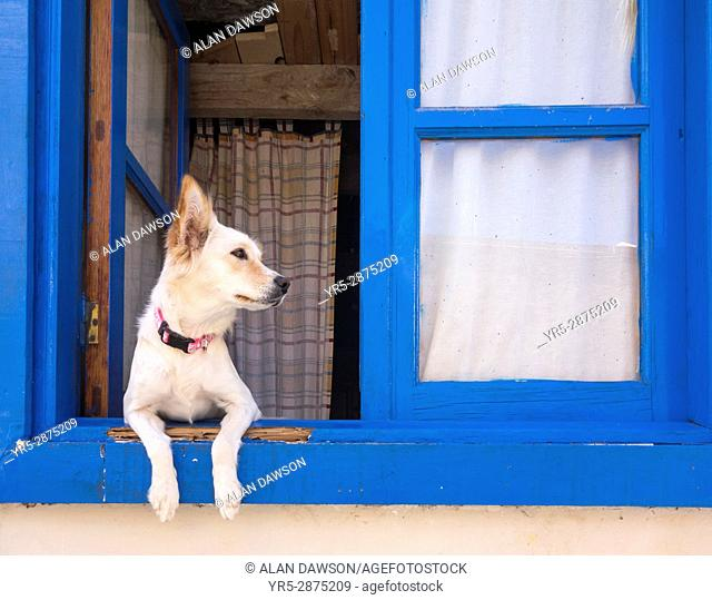 Dog looking out of window on Tenerife, Canary Islands, Spain