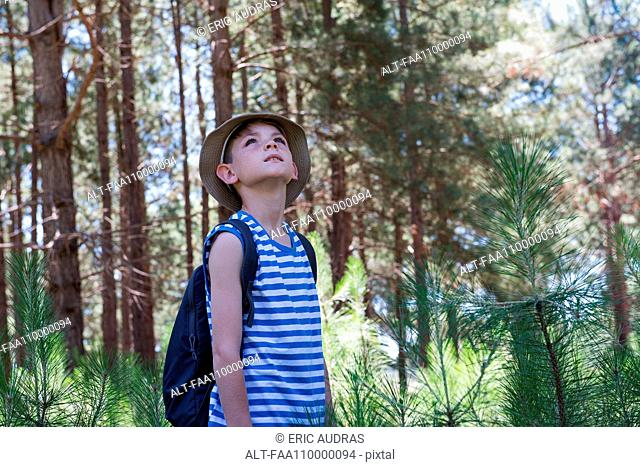 Boy hiking in woods, looking up in awe
