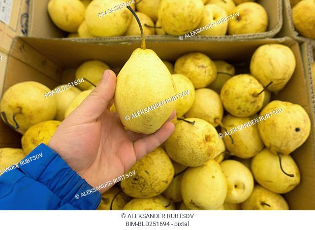 Hand holding yellow pear