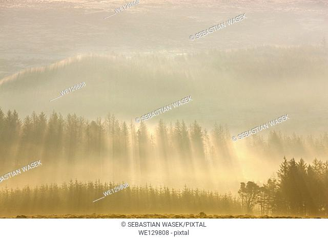 Misty morning, Dartmoor National Park, Sheepstor, West Devon, England, UK, Europe