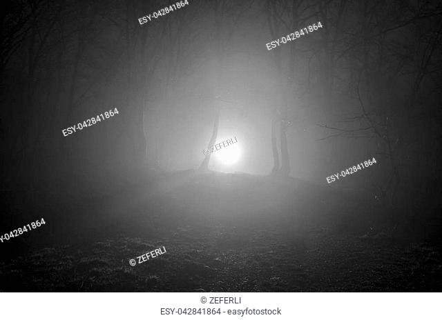 surreal light in dark forest, Magic fantasy lights in the fairy foggy forest