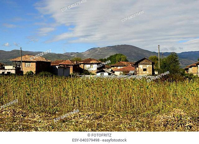 Bulgaria, humble settlement near the Greek border with tobacco field