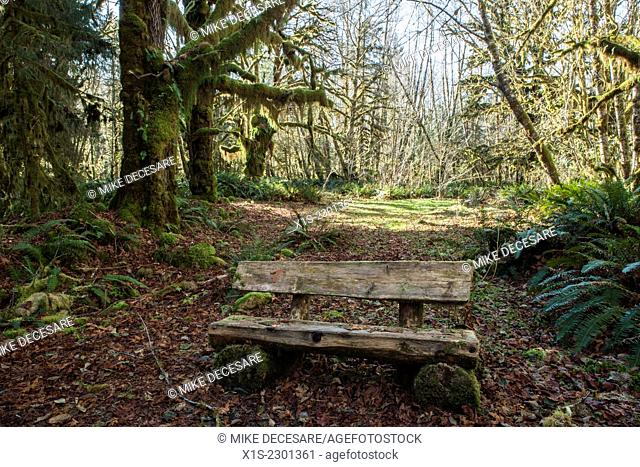 A wooden bench in the middle of a rain forest