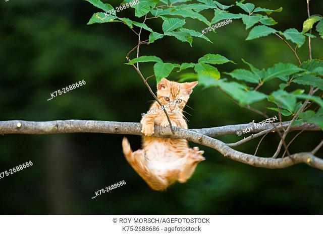 kitten hanging from branch