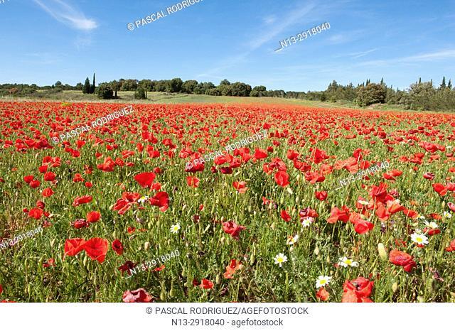 Springtime scenery, south France, Occitanie, France