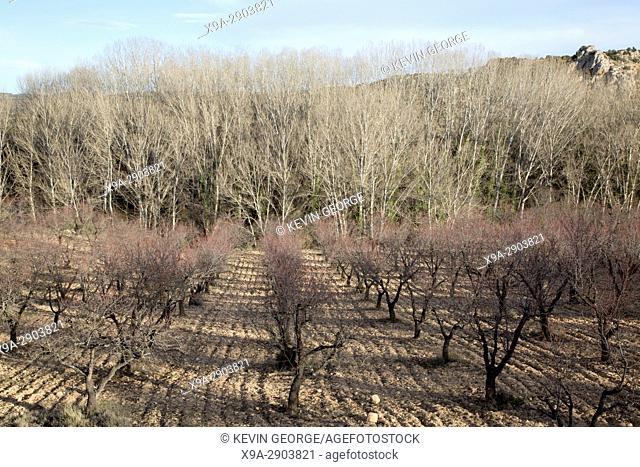 Winter Trees and Landscape near Nuevalos, Aragon, Spain