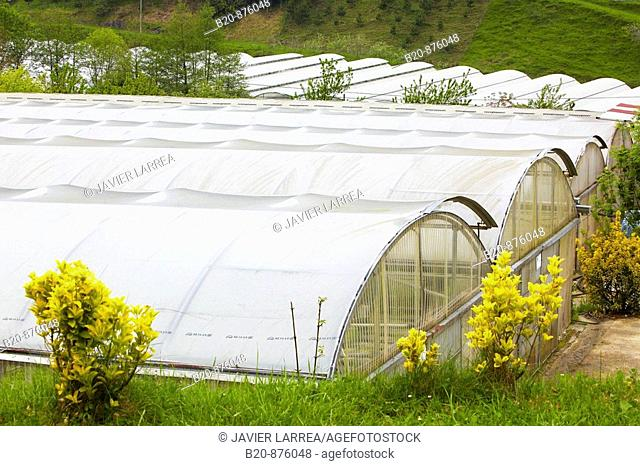 Greenhouses, Nuarbe, Azpeitia, Gipuzkoa, Basque Country, Spain