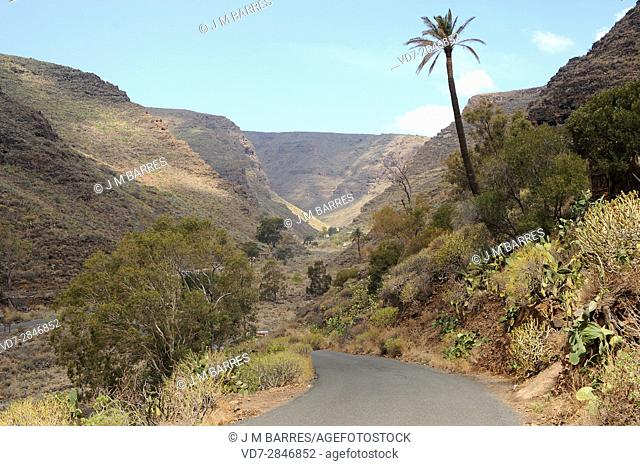 Guayadeque ravine is a Monumento Natural located between Aguimes and Ingenio. Gran Canaria, Canary Islands, Spain