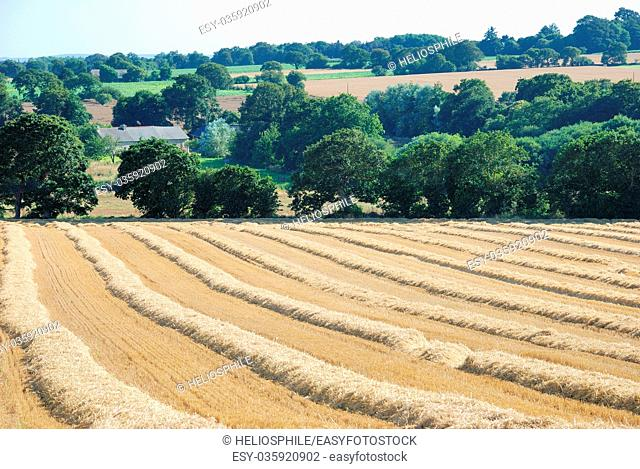 straw in a field after harvest in France