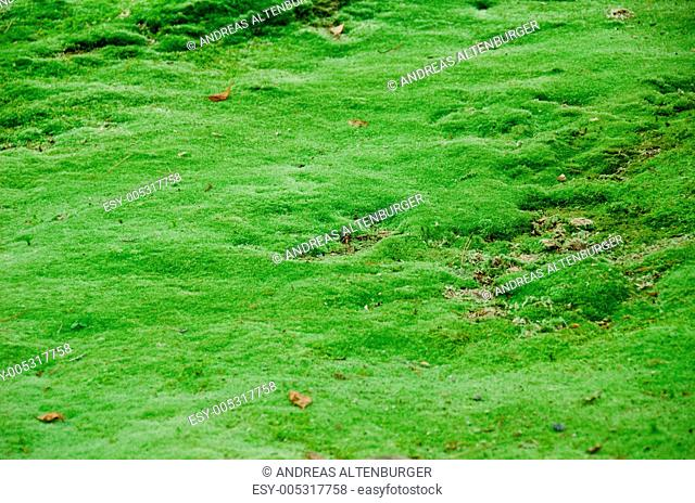 Natural green moss background