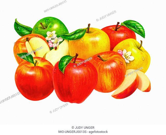 A Group of Apple Varieties