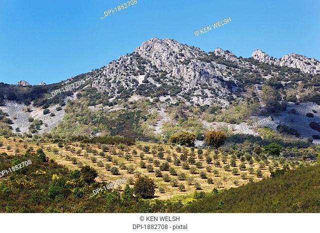 Olive Groves, Sierra De Las Villuercas, Caceres Province, Spain