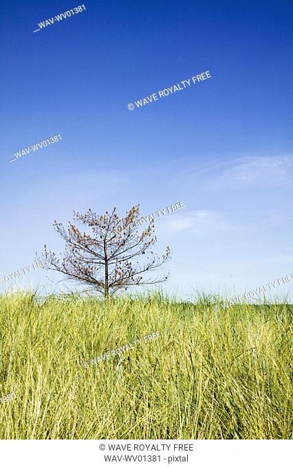 Lone tree on Sidney Spit Marine Park, BC, Canada