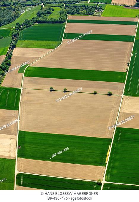 Aerial view, cornfields on the Lower Rhine, crop rotation, corn fields in spring, Neuss, Lower Rhine, North Rhine-Westphalia, Germany