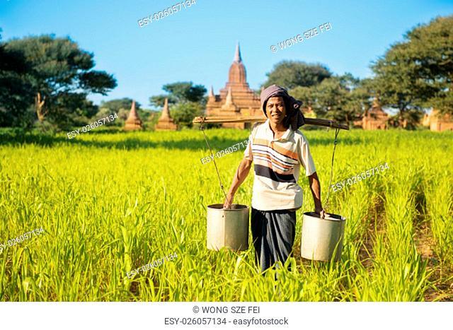 Portrait of a Asian Burmese farmer watering plant at farmland