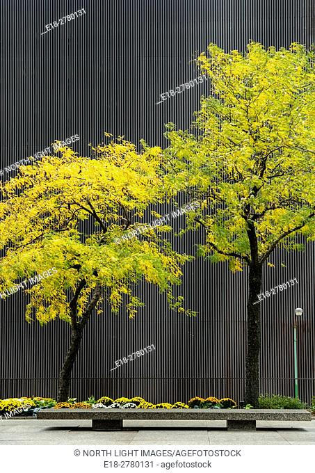 USA, IL, Chicago. Two urban trees above bench in city park. Concrete wall of parking lot behind