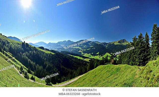 Alpine meadow, panorama