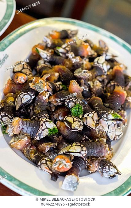 Goose neck barnacle in a plate. Zierbena, Biscay, Basque Country, Spain, Europe