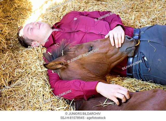 Iberian Sport Horse. Rider and bay foal resting together in a stable. Germany