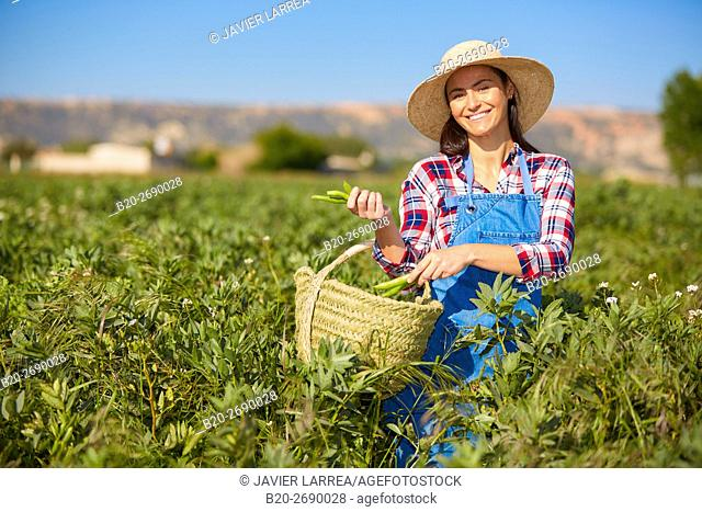 Farmer harvesting beans, Agricultural field, Villafranca, Navarre, Spain