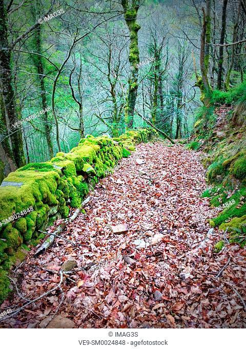 Path near San Adriano del Monte abandoned village, Grado municipality, Asturias, Spain