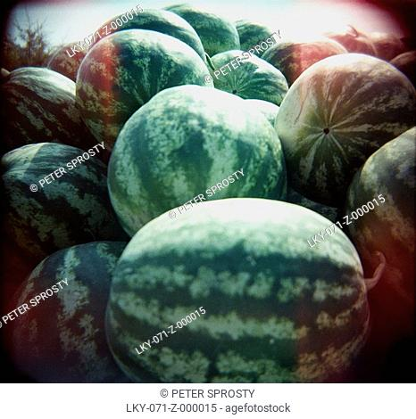 Pile of harvested watermelons