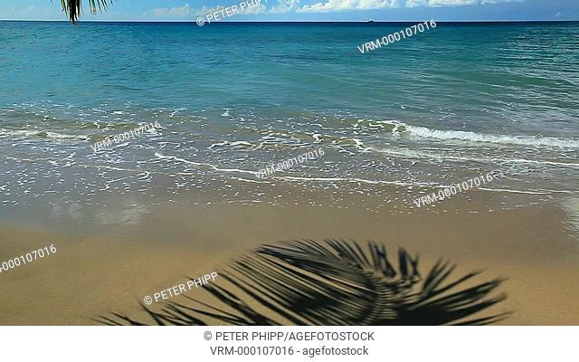 Tropical shore vacation concept