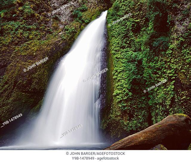 Tanner Falls descends alongside fern-covered basalt, Columbia River Gorge National Scenic Area, northern Oregon, USA