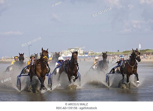 Trotting race in wadden sea traditinal horse race Duhner Wattrennen Cuxhaven-Duhnen Lower Saxony Germany Pferderennen auf dem Meeresgrund
