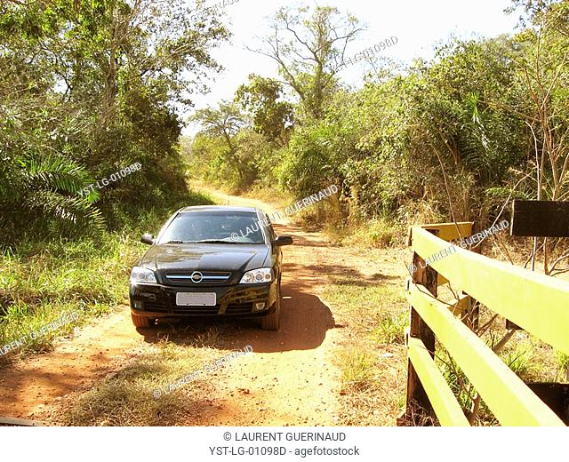 Dirt road, Pantanal, Mato Grosso do Sul, Brazil