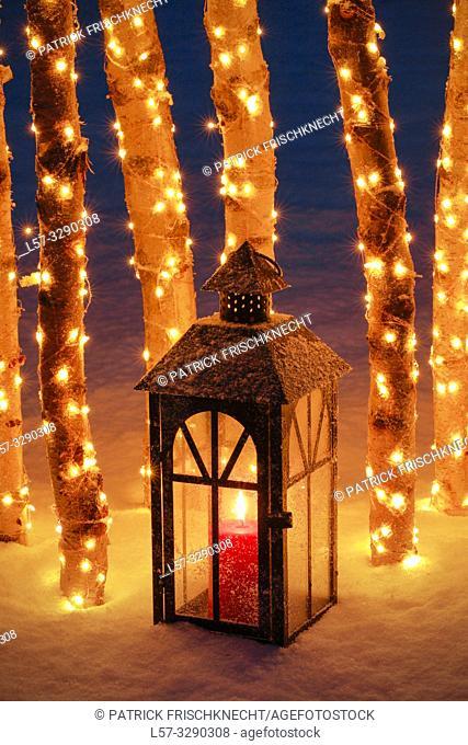 lantern among birch tree trunks with christmas lights