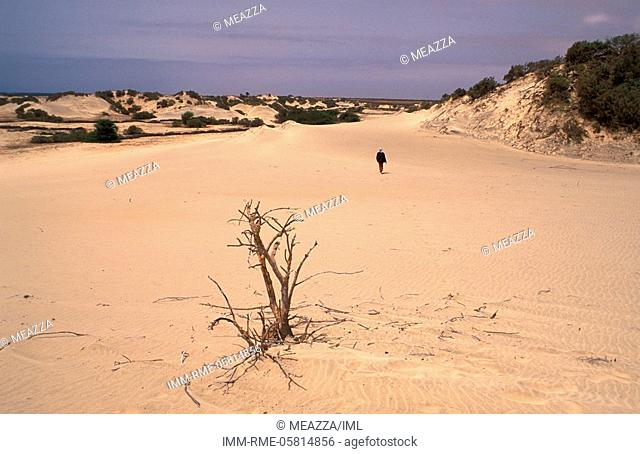 Sand dune, man walking , Maio, Cape Verde, Africa
