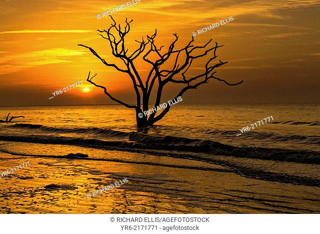 Sunrise over Boneyard Beach at Botany Bay, Edisto Island, South Carolina. Due to natural beach erosion the coastal forest is slowly being swallowed by the...