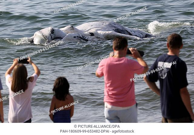 09 June 2018, Germany, Graal-Mueritz: People watch as a dead whale is dragged onto the beach at the Baltic Sea. According to experts from the German...