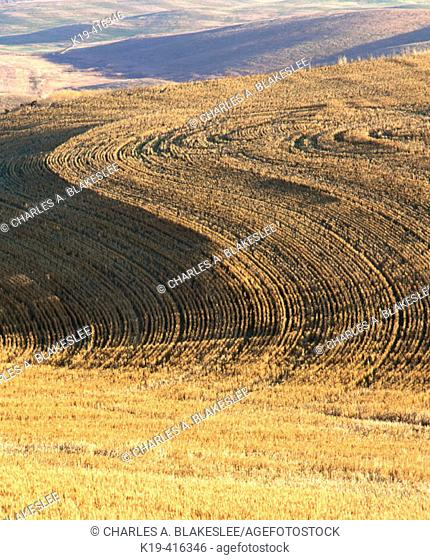 Furrow patterns in harvested wheat fields, Palouse region. Whitman County, Eastern Washington. USA