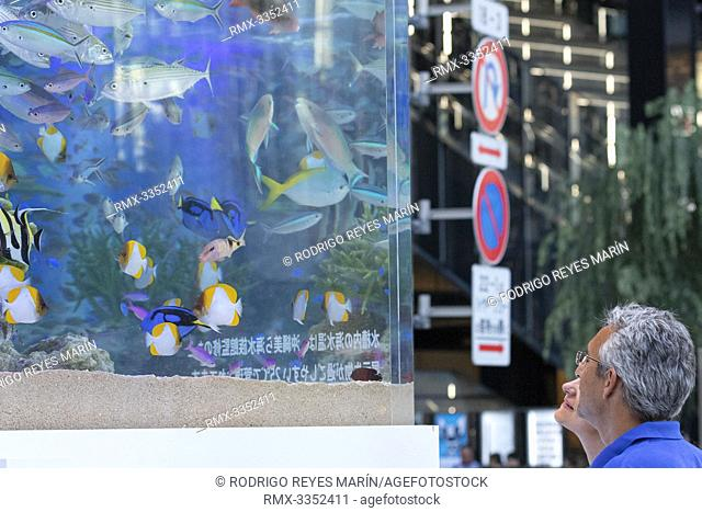 People look at tropical fishes from Okinawa swimming inside a water tank at Ginza Sony Park on July 26, 2019, Tokyo, Japan