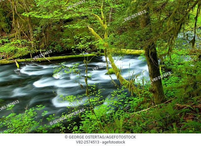 Lost Creek along McKenzie River National Recreation Trail, McKenzie Wild and Scenic River, Willamette National Forest, Oregon