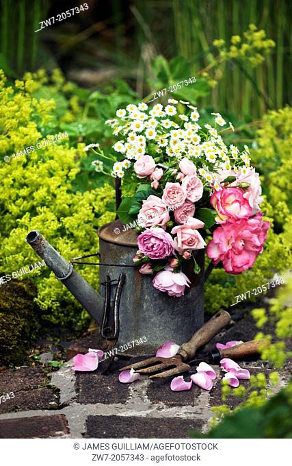 Old weathered metal watering can and garden hand tools on garden path, filled with cut flower Roses and Daises