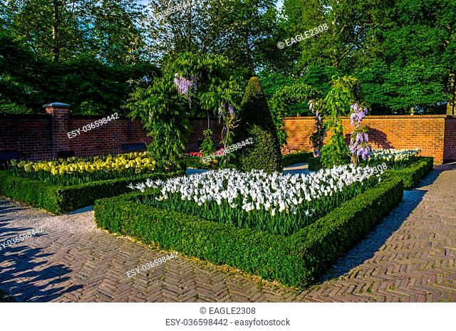 White tulips with bushes, trees and brick walls, Keukenhof Park, Lisse in Holland