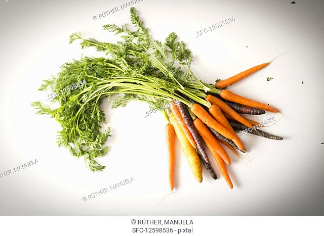 A bunch of carrots and purple carrots with green tops