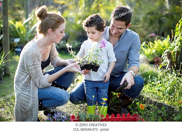 Couple and son looking at plants on allotment