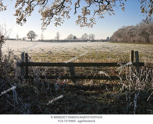 Frosty morning scene, Oxfordshire, England, UK