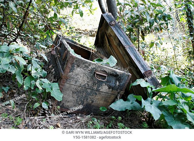 old wooden chest left in undergrowth in woods