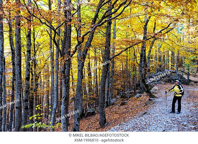 Woman and deciduous forest in autumn