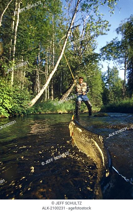 Man Fighting Rainbow Trout, Campbell Creek, Anchorage, Southcentral Alaska, Summer