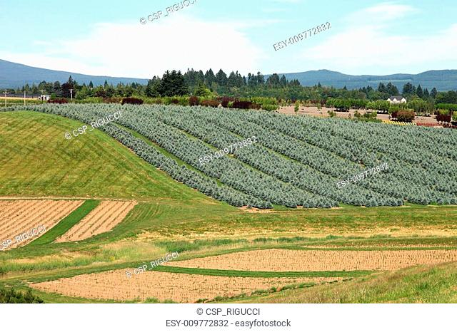 Row Variety Plant Stock Photos And