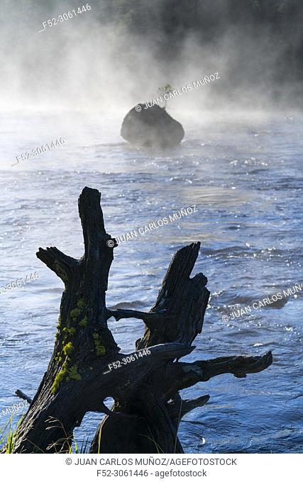 Madison river, Madison Canyon, Yellowstone National Park, Unesco World Heritage Site, Wyoming, Usa, America