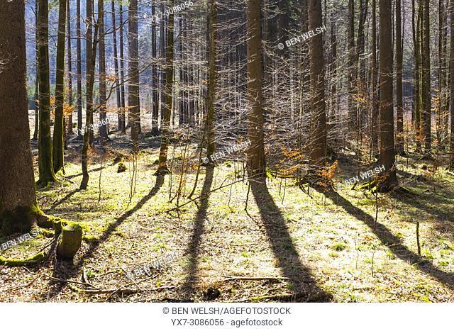 Central Eastern Alps, Austria, Europe