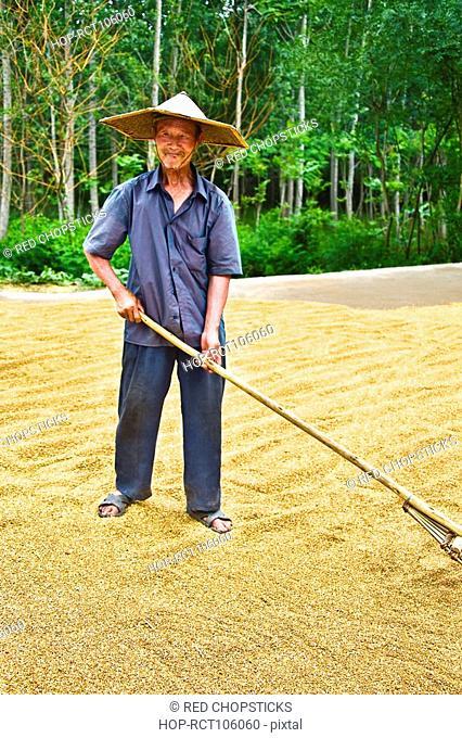 Farmer drying rice in a field, Zhigou, Shandong Province, China