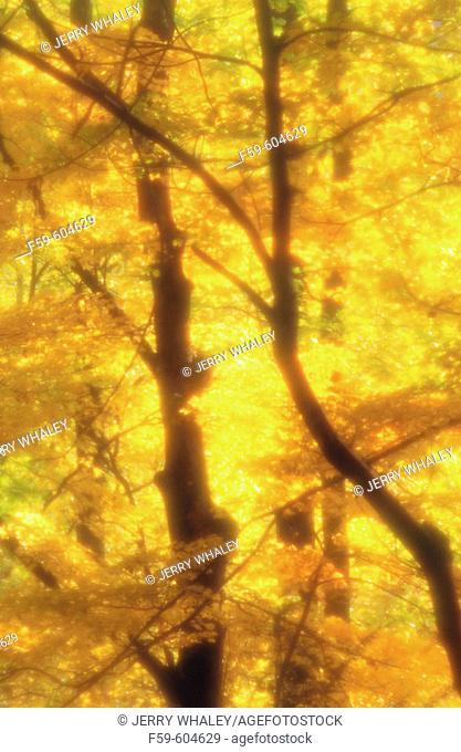 Autumn abstract. Pisgah National Forest. North Carolina. USA
